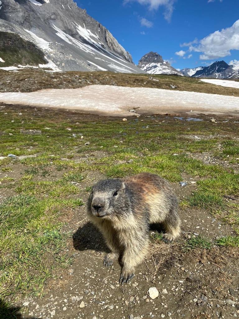Marmotte - Celiance